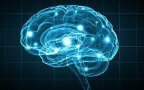 Белое вещество головного мозга