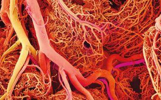 Лекарство Мексидол для сосудов головного мозга