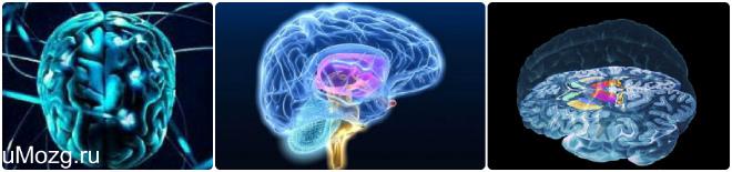 Желудочки мозга головы
