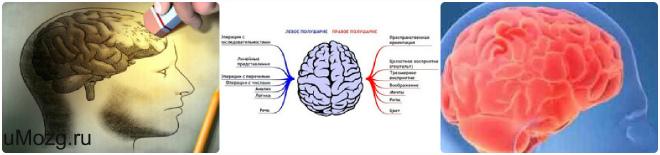Мозг человека атрофия