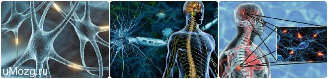 очаги рассеянного склероза в мозге человека