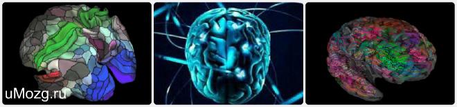 Мозг и его полушария
