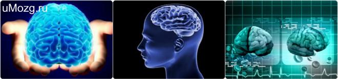 занятия для мозга