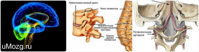 Отделы спинного мозга