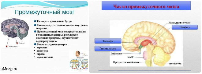 umozg-ru211
