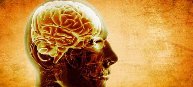 мозг продолжает жить